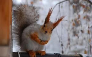 squirrel3456