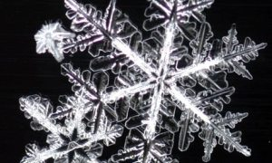 snowflake-001